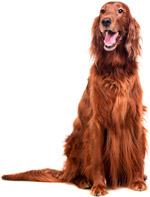 kondisjon-hund2