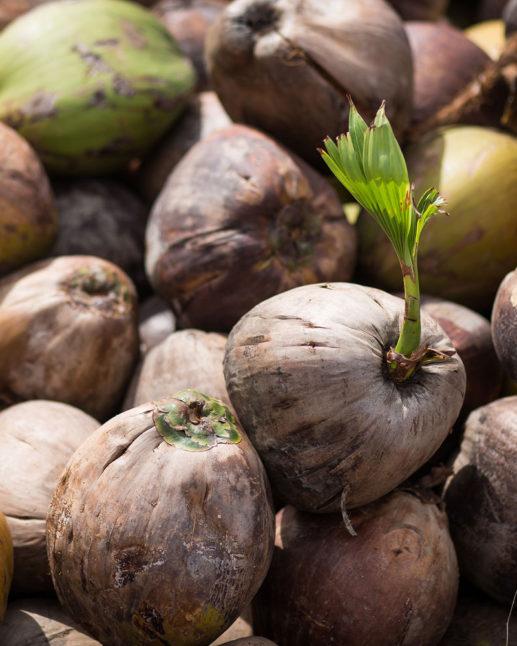 massa-kokosnotter